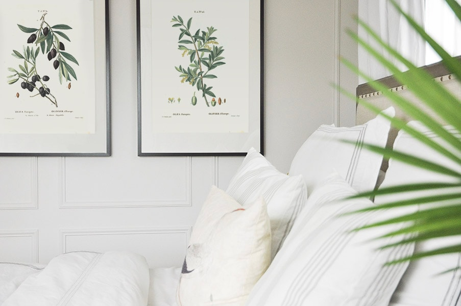 free olive branch vintage botanicals printable wall art, art print in bedroom, traditional, vintage