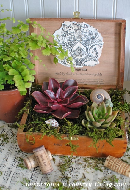 cigar box planter with succulents