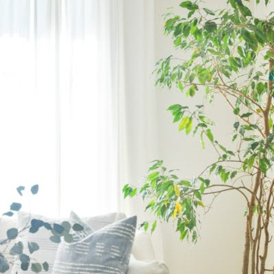 My Indoor Trees Obsession And A Roundup Of The Best Low Light Indoor Trees