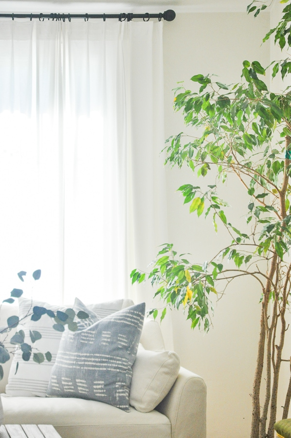 indoor ficus tree plants | easy care low light indoor trees plants