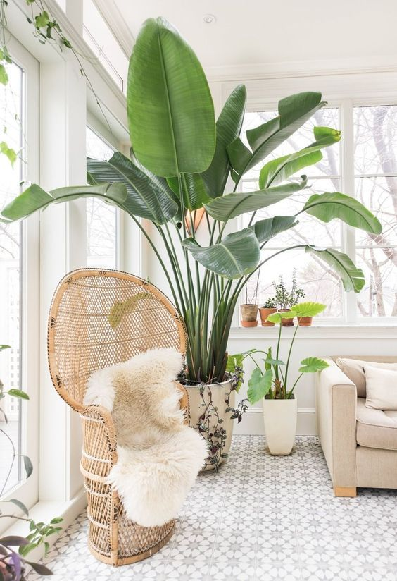 indoor plants | easy care low light indoor trees plants