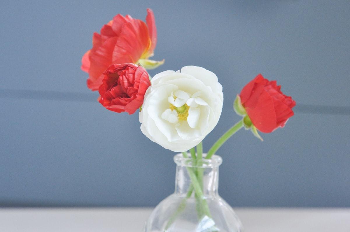 spring summer cutting flower garden, free bouquet flower from backyard ranunculus