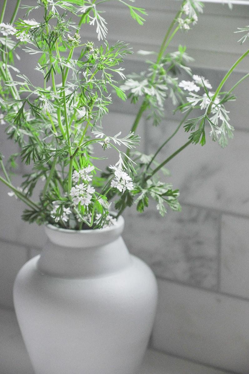 cilantro flowers in gray vase, cut flower garden