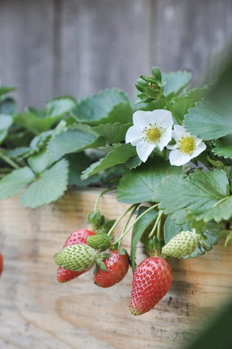 tiered strawberry planter easy DIY project