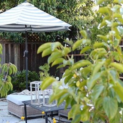 Backyard Garden Tour 2020 Summer | Small Garden in Warm Zones