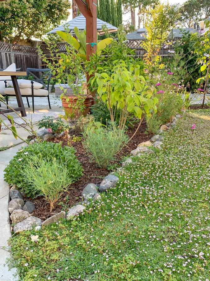 lawn to garden diy landscaping photo