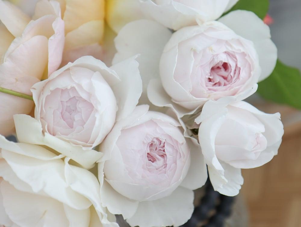 erde engel romantisch altmodisch rose