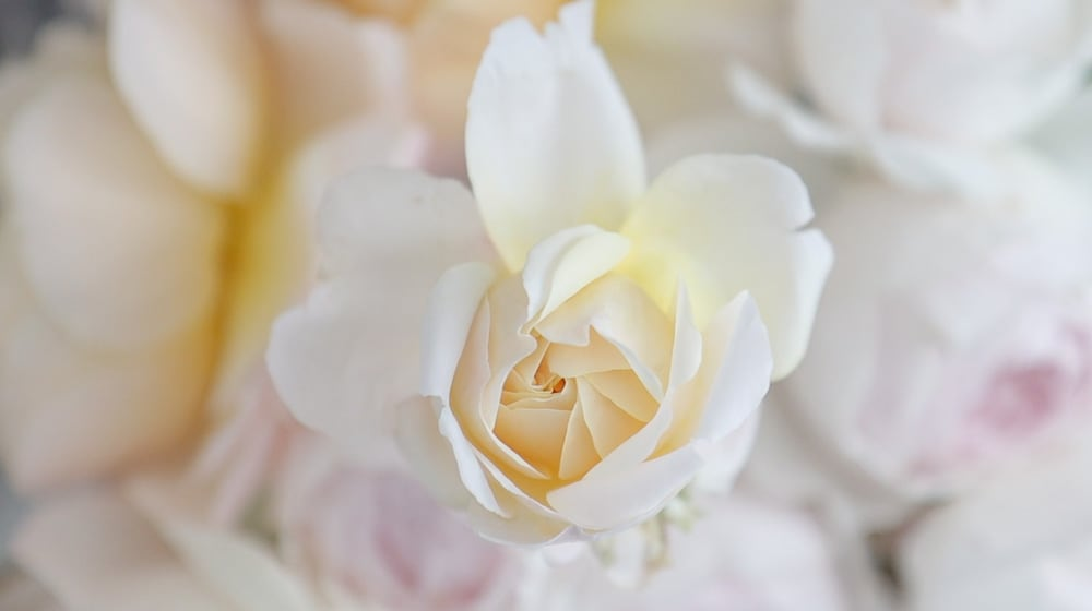 romantisches rosenmondlicht in paris altmodisch