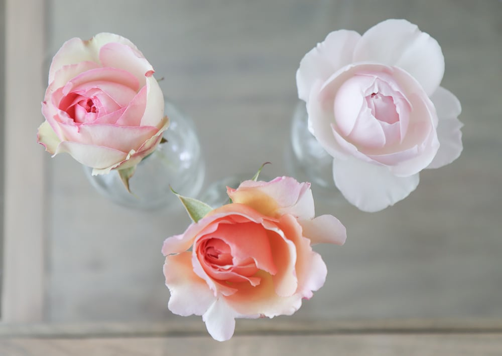 Vergleich der Lebensdauer der Rosenvase