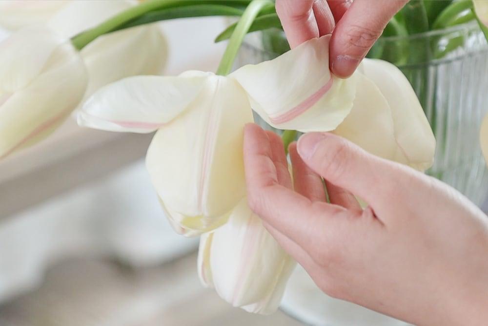 peel petals tulips florists trick